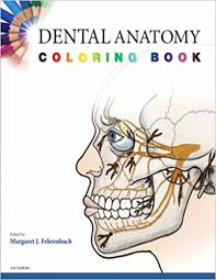 Illustration Dental Anatomy Coloring Book Free Download