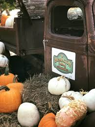 Pumpkin Patch Houston Tx Area by Blessington Farms Reopen Pumpkin Patch Har Com