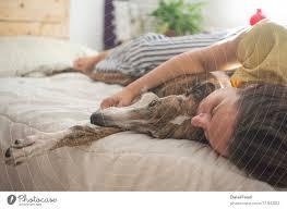 hund im schlafzimmer zum entspannen ein lizenzfreies stock