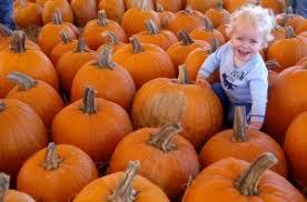 Sarasota Pumpkin Festival by Halloween Happenings