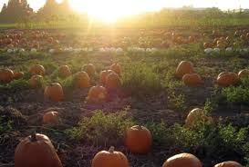 Underwood Farms Pumpkin Patch Hours by Best Pumpkin Patches And Farms Near Los Angeles
