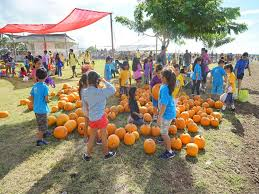 Waimanalo Pumpkin Patch Oahu by We Tried It Waimānalo Country Farmʻs Pumpkin Patch Honolulu Family