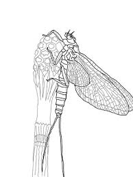 Click To See Printable Version Of March Brown Mayfly Coloring Page
