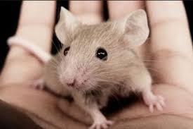 des souris dans la maison a à z extermination