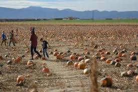 Pumpkin Patch Fort Collins by Where You Can Get A Pumpkin In Fort Collins Before Halloween