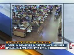 Deer Caught On Surveillance Video Entering Kroger Grocery Store In Newport Kentucky