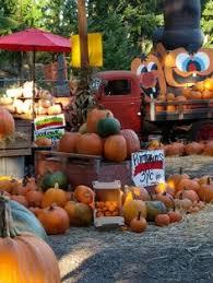 Gust Brothers Pumpkin Farm by Pumpkin Farm Fall Pinterest Pumpkin Farm Pumpkins And Farms