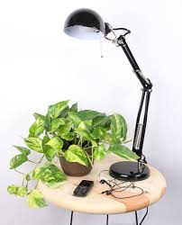 Grow Lamps For House Plants by Top Plants For College Students Costa Farms