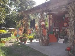 Pumpkin Patches Near Temple Texas by B U0026m Farms Pumpkin Patch Texas Haunted Houses