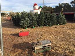 Pumpkin Patch Church Wilmington Nc by Barr Evergreens Christmas Trees Wilmington Home Facebook