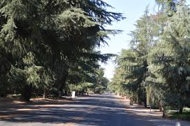 Christmas Tree Lane Fresno by Figarden Equity Assets Real Estate
