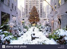 Rockefeller Plaza Christmas Tree by Christmas Tree Rockefeller Center Manhattan New York Usa Stock