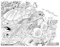 Color This Sea Turtle Underwater Scene Yourself In My Free Adult Coloring Page