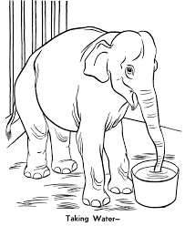 Zoo Animal Coloring Pages Realistic Elephant