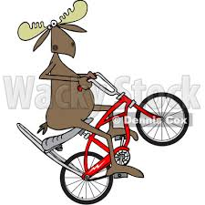 400x400 Clipart Of A Cartoon Moose Popping Wheelie On Stingray Bicycle Bmx