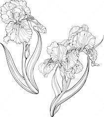 Iris Flowers Coloring Page