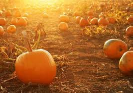 Pumpkin Patch Littleton Co by The 10 Best Pumpkin Picking Patches Around Denver Care Com Community