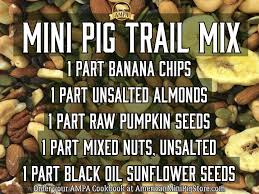 Can Guinea Pigs Eat Cooked Pumpkin Seeds by Blog American Mini Pig Association