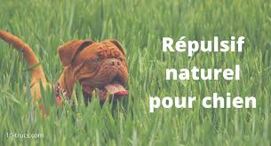 anti chien répulsif naturel pour chien