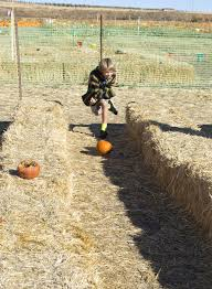 Sunnyside Pumpkin Patch by Corn Maze Pumpkin Patch Draw Youngsters To Grandview Farm Daily