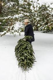 Christmas Tree Saplings For Sale Uk by 238 Best Christmas Tree Lot Images On Pinterest Christmas Tree