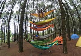 Kawasan Hutan Pinus Mangunan Menjadi Salah Satu Tempat Wisata Favorite Baru Warga Jogja Dan Sekitarnya Alasannya Karna Ini Punya Pemandangan Indah