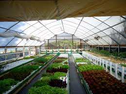 Aquaponics System Plans Hydroponic Home Garden Backyard Food Solutionsbackyard Oc Aquaponics Project Admin What Is Learn About Aquaponic Plant Growing Photos Friendly Picture With Amusing Systems Grow 10x The Today Bobsc Ezgro Amazoncom Vertical Gardening Vegetable Tower Indoor Outdoor From Fish To Ftilizer Greenhouse Im In My City Back Yard Yes I Am Satuskaco