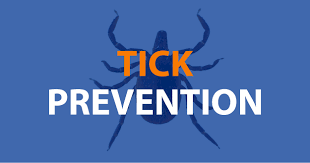 Ticks On Christmas Trees by Tuck Your Pants In And Other Ways To Prevent Tick Bites