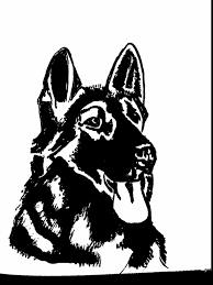 Magnificent German Shepherd Dog Face Drawing With Coloring Pages And Book