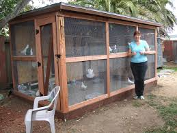 100 Pigeon Coop Plans Outdoor Cage Pusat Hobi