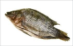 Tilapia Fish Disemboweled Image