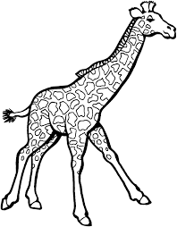 Drawing Giraffe To Color