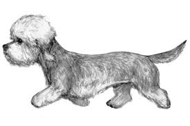 Do Black And Tan Coonhounds Shed by Dandie Dinmont Terrier Dog Breed Information American Kennel Club