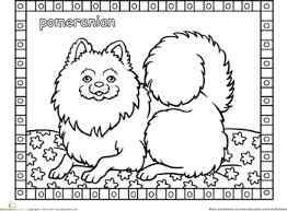 Dog Breeds Project Awesome Pomeranian Coloring Pages
