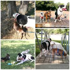 Do Treeing Walker Coonhounds Shed by Doggy Playdates Dos And Don U0027ts Your Sassy Self