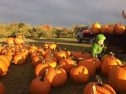 Pumpkin Picking Ct Best by Pick Your Own Pumpkins At These 8 Charming Pumpkin Patches In