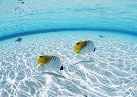 Sea Water Fish Butterfly Swimming Pool Underwater Couple Coral Reef Shallow Biology Ocean Wave Bottom