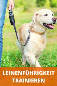 leinenführigkeit trainieren wenn hund an der leine zieht