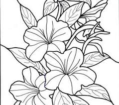Seasonal Colouring Pages Tropical Flower Coloring New In Creative Gallery Ideas A Part Of 8 Photo