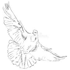 Download Flying dove stock vector Illustration of happy dove