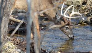 When Do Deer Shed Their Antlers Ontario by The Quality Deer Management Association Qdma