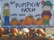 Northeast Iowa Pumpkin Patches by Hoefling U0027s Pumpkin Patch U0026 Corn Maze Marcus Ia Photos U0026