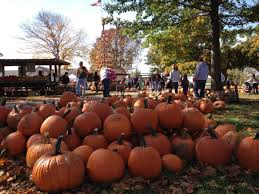 Columbus Ohio Pumpkin Patches by Fall Fun At Orchards And Farms Around Columbus
