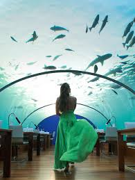100 Conrad Maldives Underwater Ithaa The Spellbounding Restaurant Clutch CarryOn
