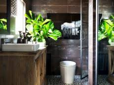 Plants For Bathroom Without Windows by Indoor Plants Low Light Hgtv