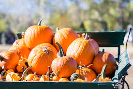 North Plains Pumpkin Patch by Pumpkin Patches And Corn Mazes Near Charlotte