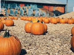 Nearby Pumpkin Patches by 5 Best Must Do Halloween Activities G U0026d Blog
