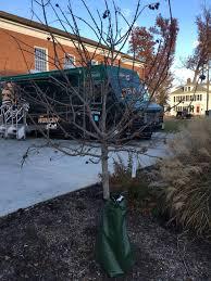 Plantable Christmas Trees Columbus Ohio disgraceful 10 terrible christmas trees at ohio universitythe