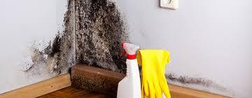 schimmel an der wand beseitigung prophylaxe vasner