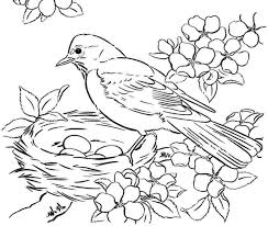 Coloring Pages For Adults Birds Cooloringcom